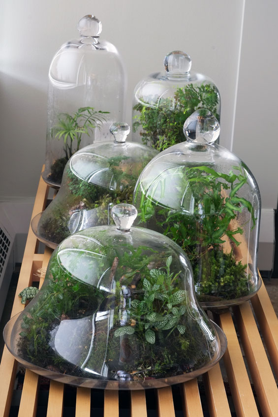 Balcony Gardener » Blog Archive » Glass Garden Update